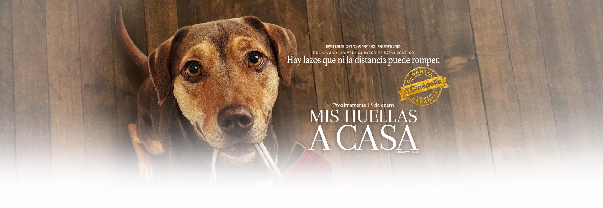 Banner Mis Huellas a Casa | Garantía Cinépolis
